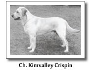 Ch. Kimvalley Crispin